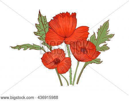 Red Poppies With Blossomed Flowers, Lush Petals And Leaves. Blooming Remembrance Floral Plant. Retro