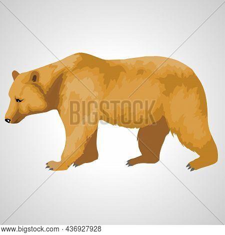 Bear Isolated Animal Illustration On White Background. Bear Illustration.