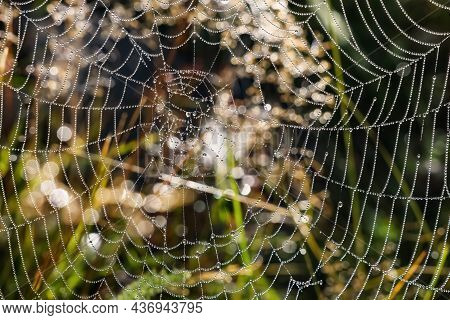 Beautiful Cobweb With Dew Drops On Grass In Morning, Closeup
