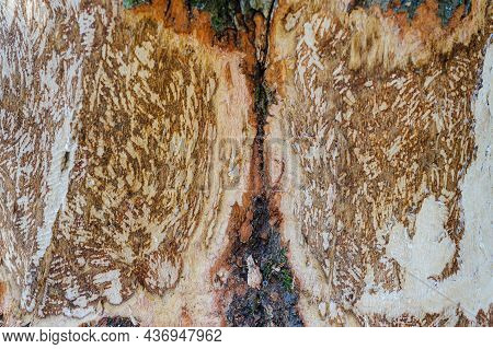 Tree Trunk With Marks Of Beaver Teeth. Decorative Background Texture Of A Tree Trunk Without Bark. C