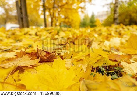 Beautiful Autumn City Landscape With Yellow Trees And Leaves, Natural Outdoor Travel Background. Aut
