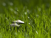 Macro picture of mushrooms growing in green grass poster