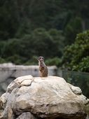 Photo the young animal in the zoo ground squirrel outdoors poster