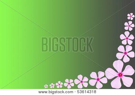 Pink Periwinkle Flower Backgrround