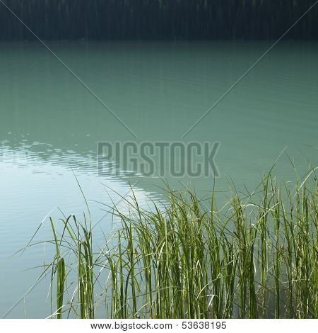 Grass In Lake