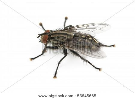 Fly Is Isolated