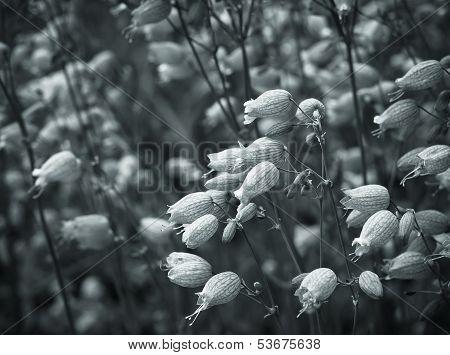 Vegetable Abstaktny Black-and-white Background.