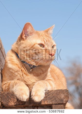 Ginger tabby cat resting on a wooden step, looking to the right of the viewer poster
