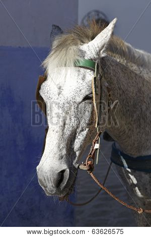 Close-up Of A White Horse With Cart