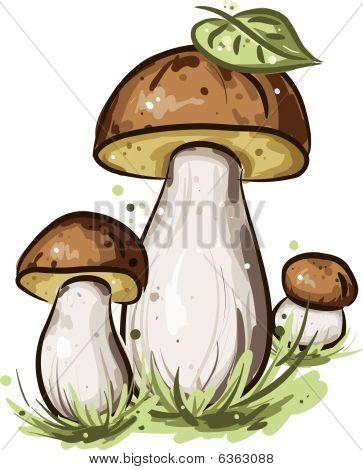 Three mushrooms with green leaf
