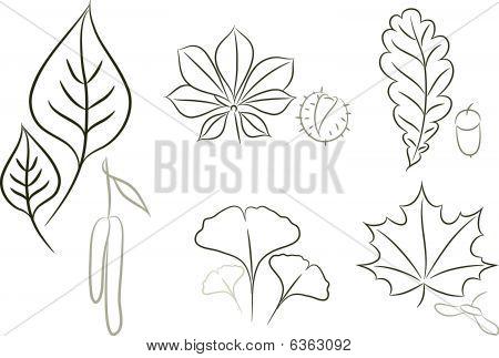 Leaf sketch