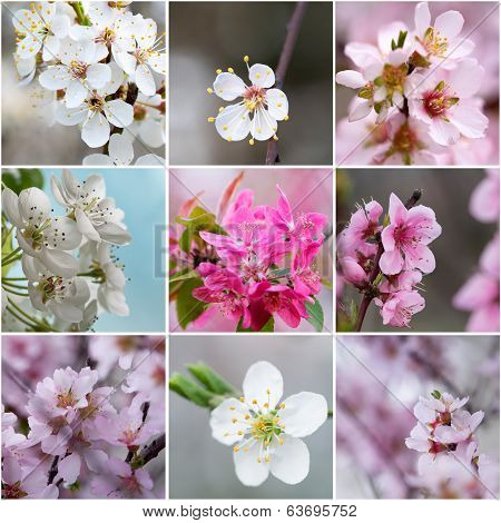 Collage With Spring Flowers