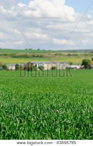 Green Wheat Field With Agricultural Buildings In The Background