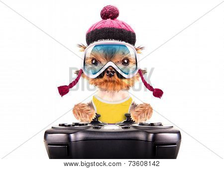 dog  dressed as skier play on game pad isolated poster