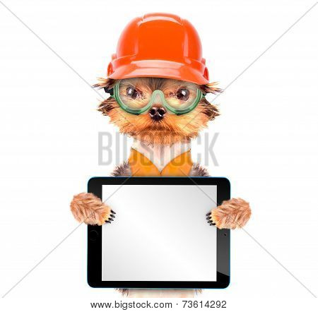 dog  dressed as builder holding blank tablet pc poster