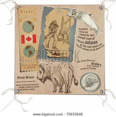 Canada - Pictures Of Wildlife