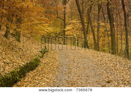 Road Through A Forest In Autumn