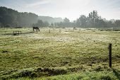 Grazing horses at dawn on a foggy day in the early autumn season. poster