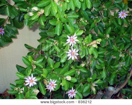 pretty purple flower bush