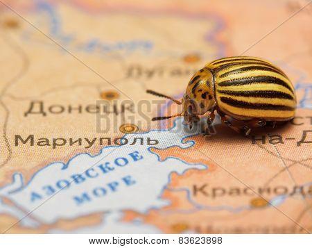 Colorado bug on map