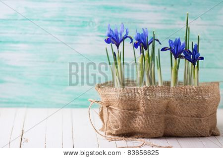 Postcard with fresh spring flowers. Still life photo. Selective focus is on right flower. poster