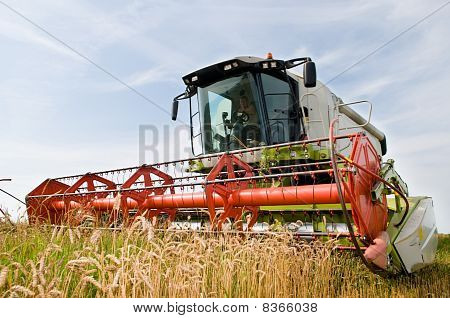 Harvesting Combine In The Wheat Field
