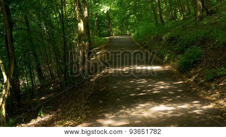 Lane in the woods