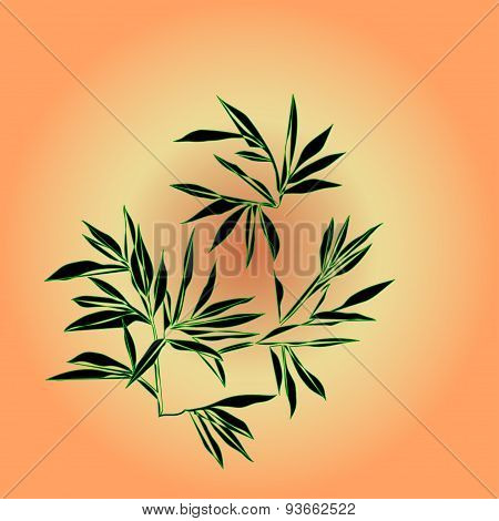 Bamboo branches are on sunlight background
