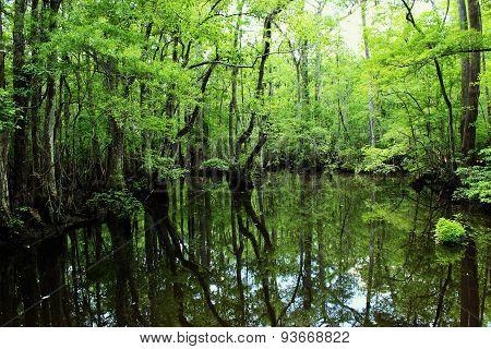 Four holes swamp South Carolina
