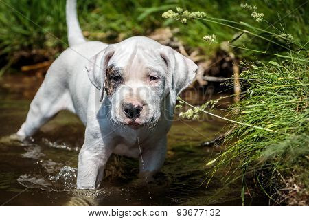 Puppy wades in the water