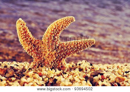 closeup of an orange seastar in the shore of the sea