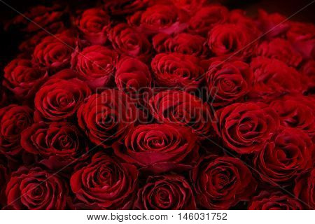 Claret roses bouquet. Red roses background. Top view.
