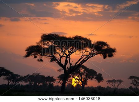Typical african sunset with acacia trees in Masai Mara Kenya. Horizontal shot. Sun behind a tree