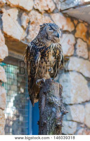 Eagle Owl Is Sitting On A Log