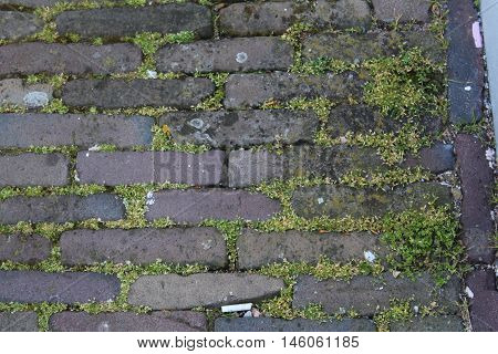 Background photo of moss covered brick pavers in Holland