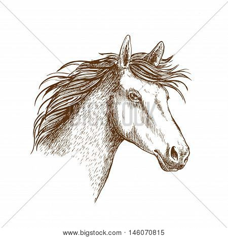 Sketched stallion horse icon with head of arabian riding horse. Equestrian sporting theme or t-shirt print design