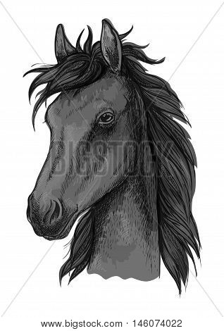 Black arabian horse sketch of purebred stallion with fluffy forelock. Horse racing badge, equestrian sporting competition or t-shirt print design