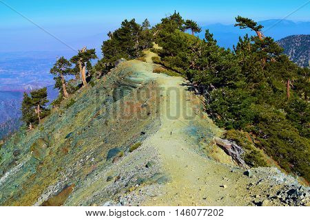 Hiking Trail on a mountain ridge surrounded by a forest and cliffs taken in Mt Baldy, CA