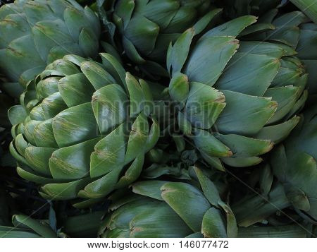 Large dark green Artichokes from central California