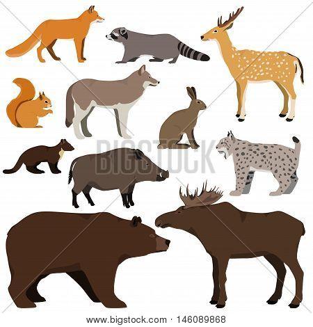 Vector set of cartoon forest animals. Brown bear raccoon squirrel spotted deer lynx marten wild boar elk wolf fox hare.