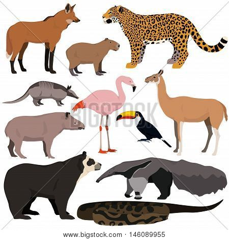 Vector set of cartoon south american animals. Jaguar anaconda flamingo maned wolf tapir capybara anteater armadillo toucan guanaco spectacled bear.