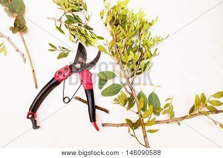 Pruner isolated on a white background. Series garden tools.