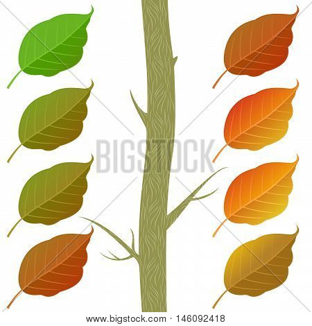 Autumn Poplar Leaves Set