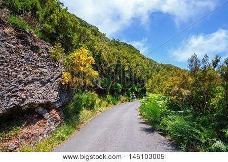 Route In  Laurel Forest To Levada Risco, Madeira Island, Portugal