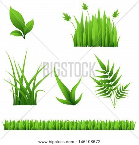 green grass and leaves isolated on white background