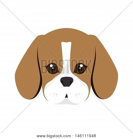 beagle breed dog canine pet animal. puppy cartoon. vector illustration