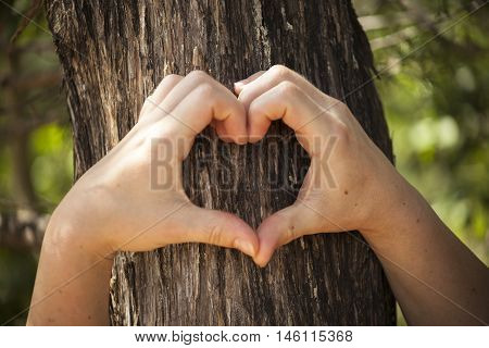 Heart shaped female hands set against the bark of a live oak tree.
