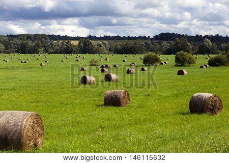 Haystacks In Sunlight