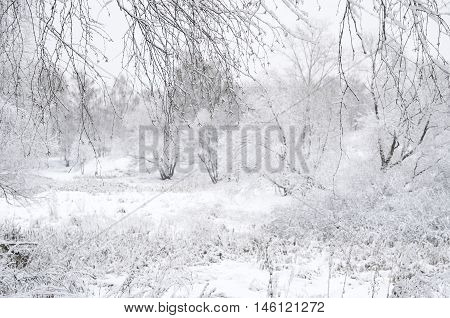 Blurred Winter Landscape