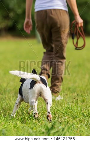 woman with a Parson Russell Terrier on the meadow